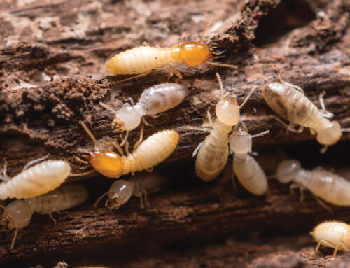 Termites Secretly Destroying Your Home